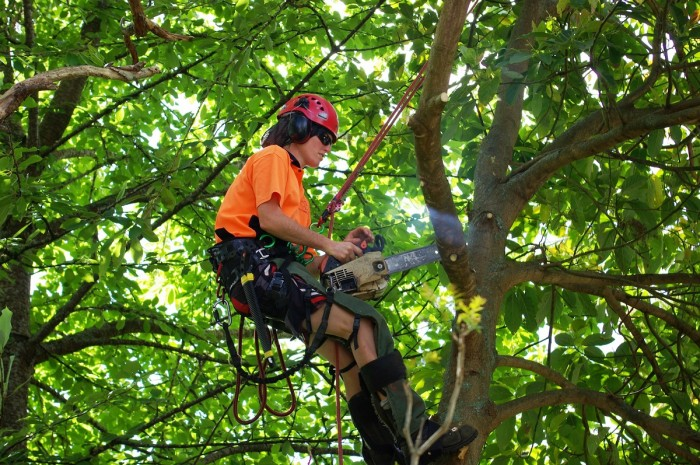 Chrissy Spence in a harness high up in the branches of a tree